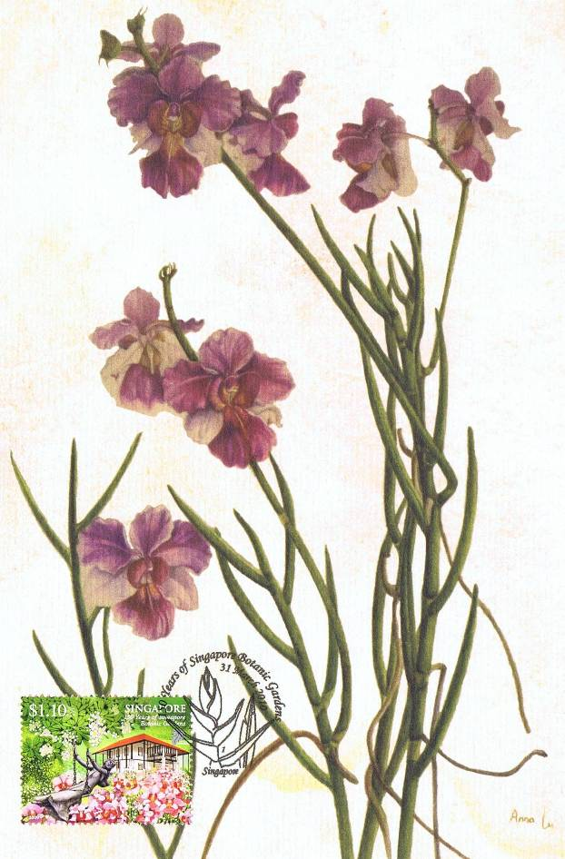 Orchid Scientific Drawing Each Scientific Drawing is
